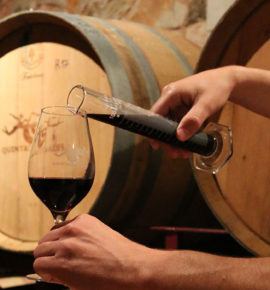 Wine in the Algarve Winemaker Experience