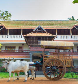 Letter From South Asia – Kerala, India
