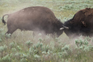 National Parks Revealed